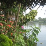 Lovely garden by the water