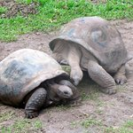 We took a trip down to the south and met some giant tortoises, getting romantic