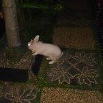 sweet bunnie