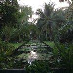 Lily pond garden