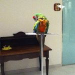 Parrots outside dining area :) take a photo with them!
