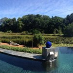 The pool and lily pond beyond it