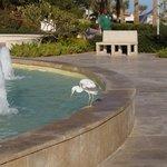 фонтан и птичка