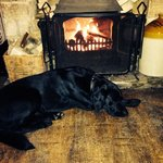 Arthur cosy by the fire!!! ❤️