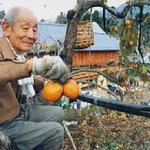 Harvest of persimmon 柿の収穫