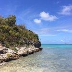 Bird Island Paradise