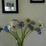 Fleurs d'agapanthe