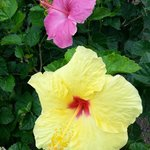 Amazing lemony Yellows and vivid pinks