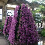 Glorious Orchids on a tree form