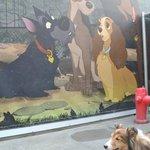 Disneyland Kennel