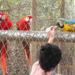 captivity birds