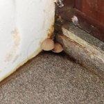 Mushroom behind bathroom door