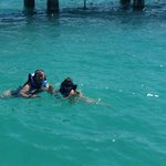 Swimming with sharks and stingrays