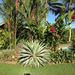 tropical gradens