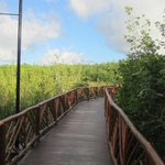 Bridge over everglades