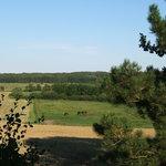 View from Svanfolk Holiday Rentals