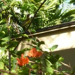 Yes, there is a little Olive Backed Sunbird in this photo.