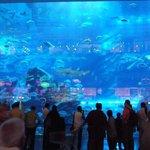 Giant fishtank!
