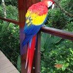 Carlota the macaw