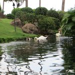 swans, duck, flamingos, birds etc to watch