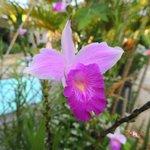 orquídeas em volta da piscina