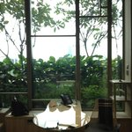 taman hijau di pinggir kamar