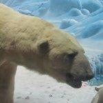 ours arctique