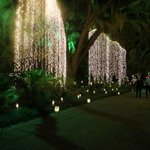 Christmas 10,000 candles