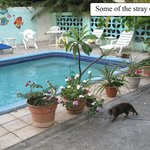 Stray cats around the pool