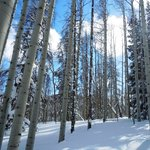 Along the snowshoe trail