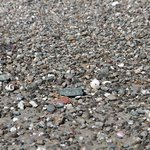 Plenty of shells and pebbles to browse on private beach