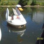 Swan boats.