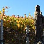Pretty path through vineyard