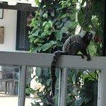 Macaco visitando o café da manhã