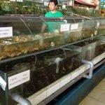 Fresh seafood in aquarium