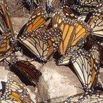 mighty monarchs 1