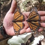 mighty monarchs 2