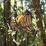 mighty monarch 3