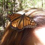 mighty monarch 6