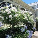 Kurrajong House Front Garden