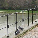 雨の中、橋の手すりではねを休める鳩