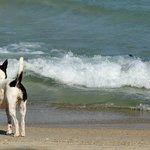 streunende Hund am Strand