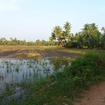 View of paddy field