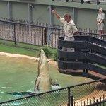 Wildlife warriors bird and crocodile show.