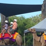 The camel ride, a big hit with the kids.