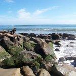 Rock outcrop at Capitola City Beach