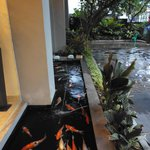 Fish pond at hotel entrance