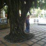 Красивое и необычное дерево