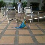 Шикарный, дружелюбный попугай, достопримечательность Отеля Pinnacle