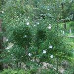 jardines con plantas y flores